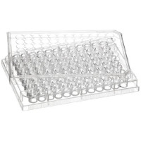 Cell Culture Plate